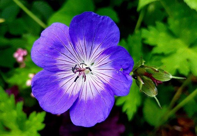 Picking Plants That Require Little Maintenance For Your Landscape