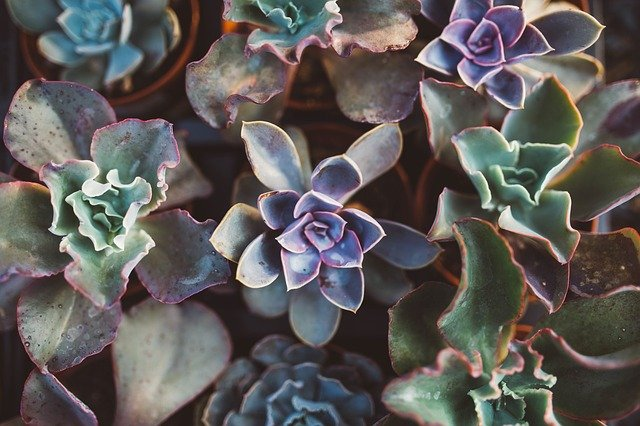 Make Your Yard A Paradise With These Landscaping Tips